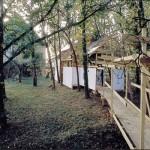 """""""Transfert"""" (Saché-1993)"""