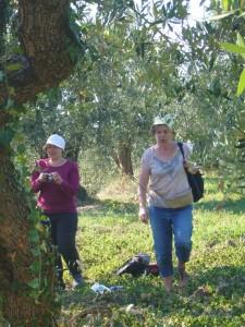 aquarelle dans une oliveraie près serre da Rapolano  le 15 juillet 2014